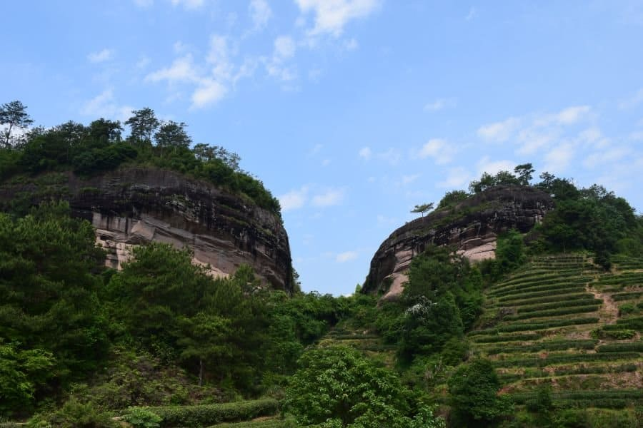 tea-garden-in-wuyi-preserved-region-2